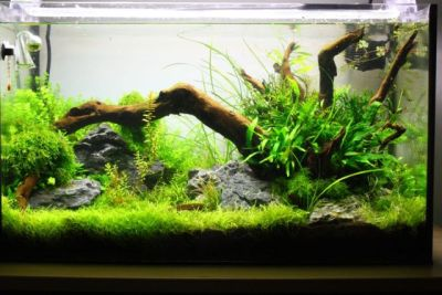aquascaping store naturaquarium bodengrund d nger meerwasser forum aquascaping store. Black Bedroom Furniture Sets. Home Design Ideas